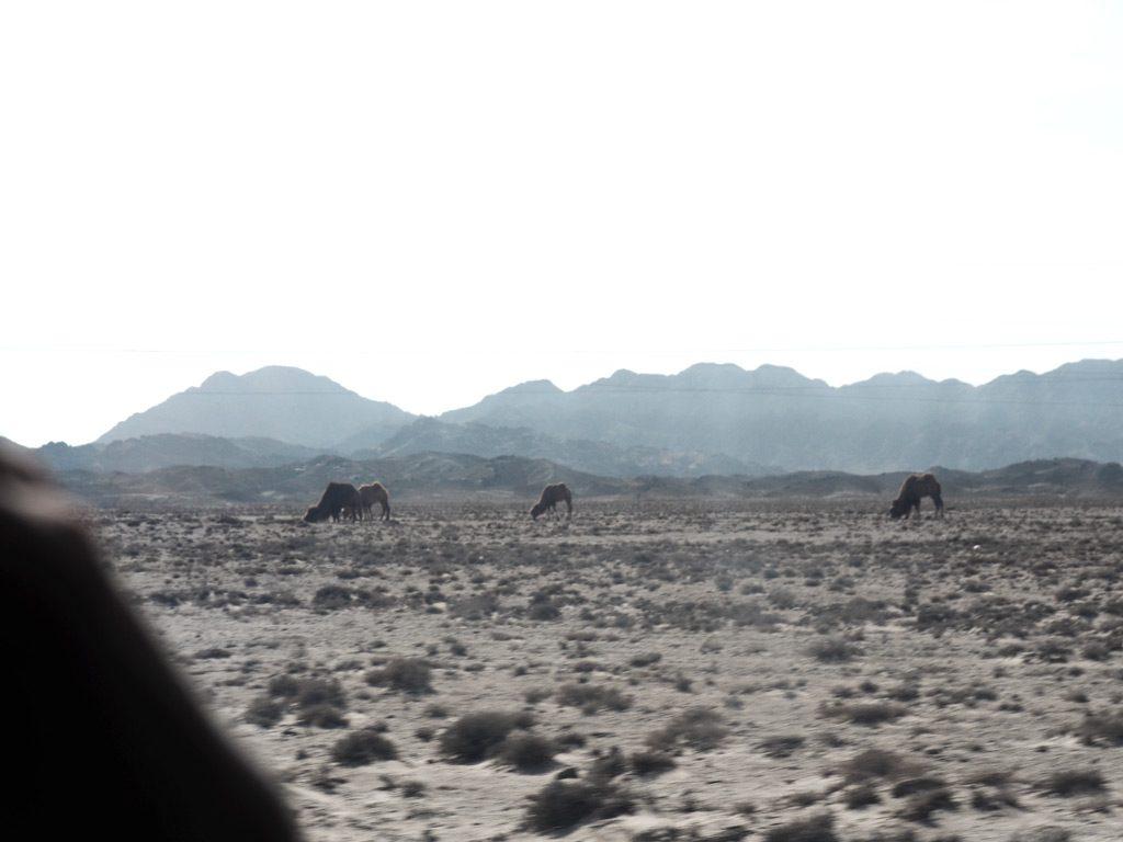 olow-blog-cashpistache-desert-chine-7